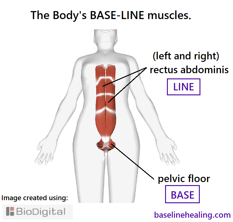 female Base-Line muscles pelvic floor like a basket between the legs, and the rectus abdominis muscles from pelvis to chest, two parallel muscles, made up of panels of muscle side by side, to be activated in sequence from base to chest. Connecting with these muscles is how I learned to release the pains of fibromyalgia and other chronic pains.