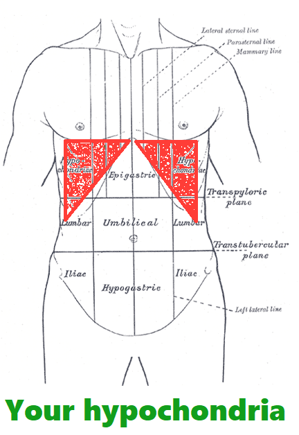 The body's two hypochondrium, plural hypochondria. Where the rectus abdominis muscles attach to the ribs.