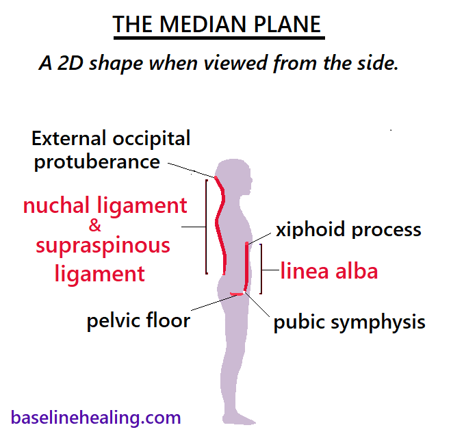 The median plane, a 2 dimentional shape when seen from the side. The linea alba, nuchal ligament and supraspinous ligament all lie on the median plane.