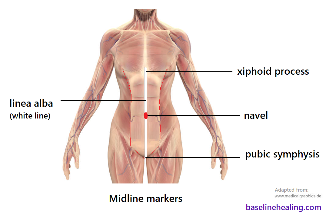The human body seen from the front showing the navel, or belly button lies. Midline. In the middle of the body.  Part of the linea alba (white line) a strip of connective tissue from pubic symphysis of the pelvis to xiphoid process of the sternum. The navel should align with the sternum and pubic symphysis where the linea alba is a straight line.