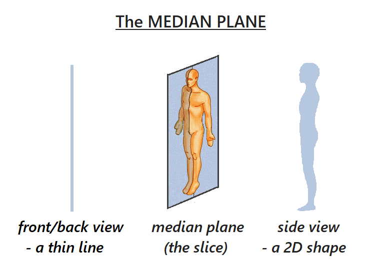 The median plane is the thinnest slice (plane) that splits the body into left and right sides. Also known as the mid-sagittal-plane it is our true midline for alignment and body balance.  A 2d shape when seen from the side, with a front and a back to the shape.  When viewed from the front or back the median plane is a thin line straight down our midline from head to pubic symphysis.  One leg lies either side of the median plane.