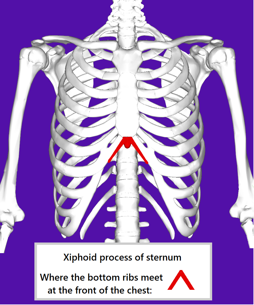 front view of the thorax showing the ribs and sternum. The xiphoid process of the sternum is highlighted, an inverted V where the bottom ribs meet at the front of the chest.